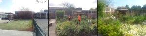 Community Garden - before, during & after
